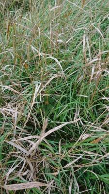 1569959268_01_gräs_och_gran.jpg