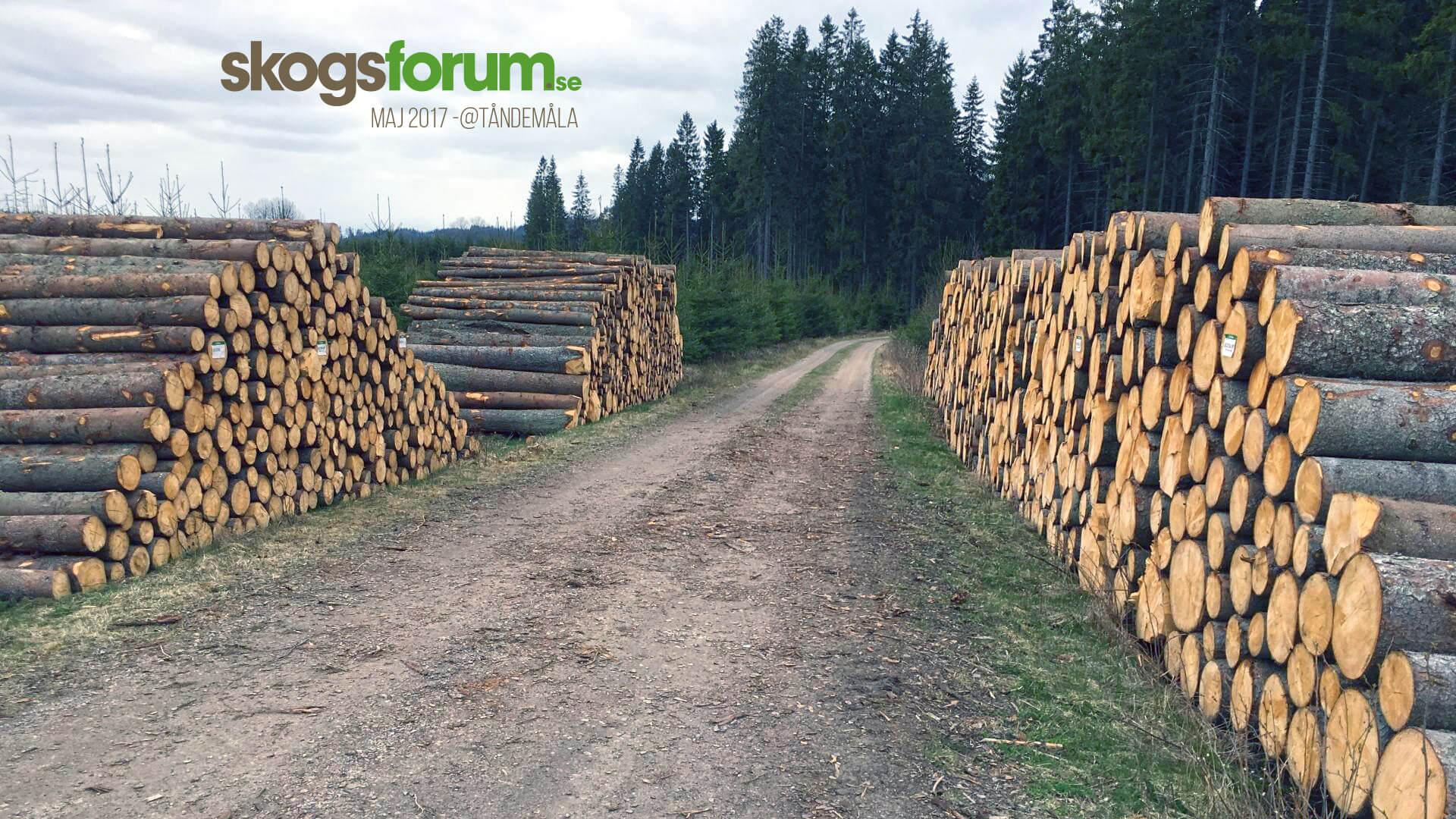 Skogsforum sågverk