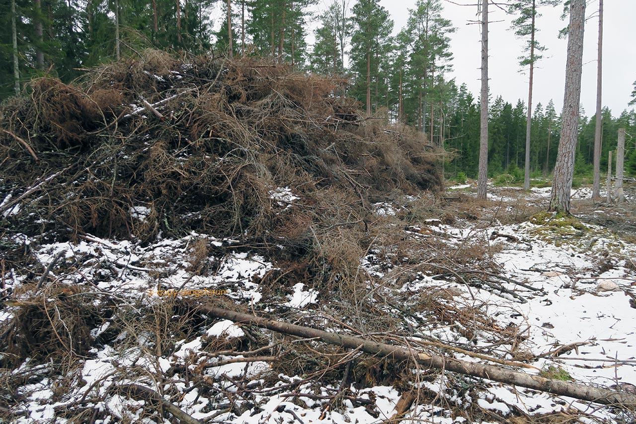 Skogsforum blogg