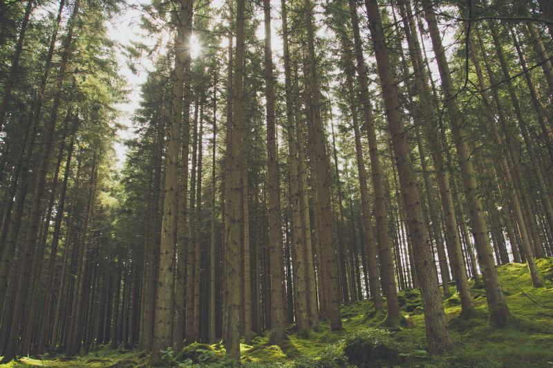 pelarsal-timmer-skog_1576239681.jpg