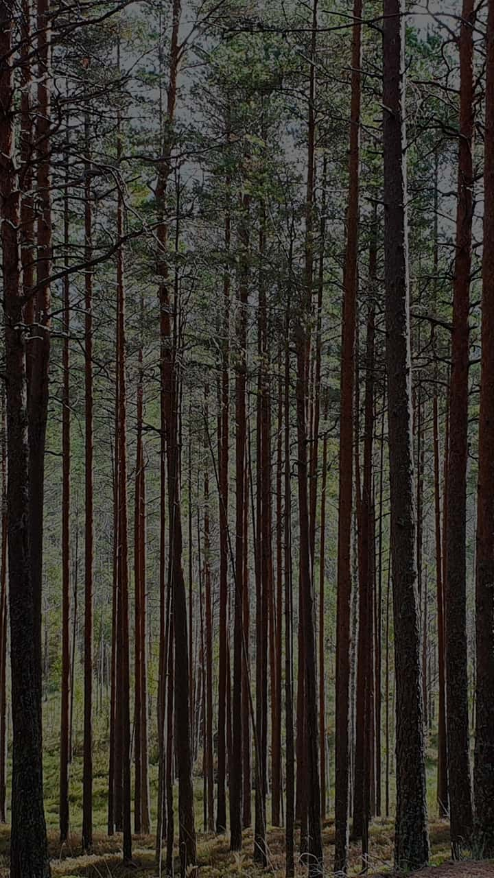 hur många träd finns i sverige